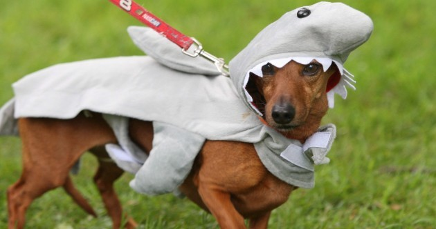 Your pets hate Halloween - here's how to make them feel better