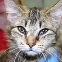 Two-day rescue: 150 sick cats were found in walls and rooms of a house in the US