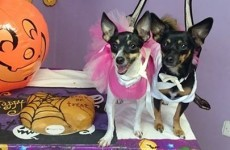 This Wicklow pet day care held an adorable Halloween party just for dogs