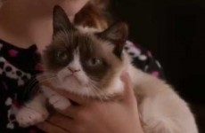 Yes, the Grumpy Cat movie is actually happening and here's the bizarre trailer