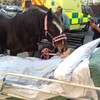 Hospital grants dying woman's final wish to say goodbye to beloved horse