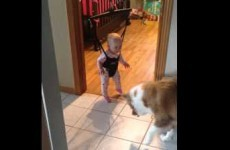 Adorable bouncing baby laughs as dog tries to catch her shadow