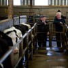 We've sent Romania a load of pregnant cows raised by prisoners