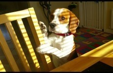 Crafty dog is a better negotiator than you will ever be