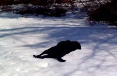 Dog body slides in the snow, demonstrates how to live your best life