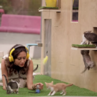 Stressed-out people put in a glass box with a load of kittens