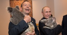 World leaders cuddle koalas, try to solve global warming