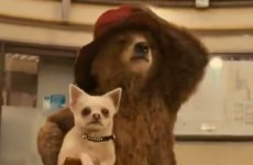 The new Paddington Bear film received a PG rating for 'mild sex references'