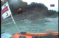 Hear the one about the bull who fell off a cliff and spent the night on a ledge?