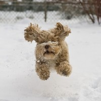 Own a pet? Here are some tips for keeping them safe in bad weather