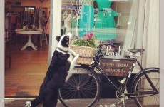 Vintage bike stolen outside Ranelagh shop highlights soaring bike theft problem