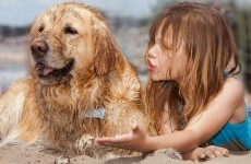 Does your dog really understand you?
