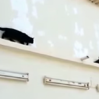 This smug pigeon outsmarting a cat is just perfect