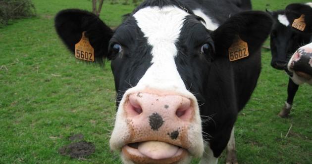 Farmers say rural Ireland will fall into turmoil if Phil Hogan doesn't help them