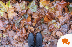 Dublin Sounds: An autumnal walk in Dartmouth Square