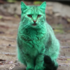 A green cat is roaming the streets of Bulgaria