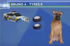 This might be the greatest television news report ever