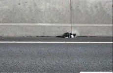 Rescue on the M50: Kitten stranded on motorway