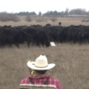 Trombone-playing farmer serenades his cows with Jingle Bells