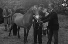 "This old newsreel clip of the Connemara Pony Show is charmingly Oirish ""to be sure"""