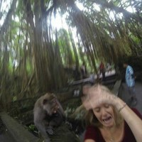 Woman tries to take a selfie with a monkey, fails spectacularly