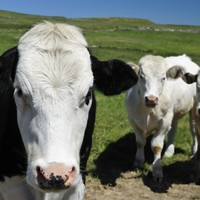 Cattle-rustling: Man to face charges after border arrest