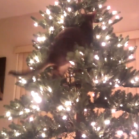 This video proves that cats and Christmas trees will be mortal enemies forever