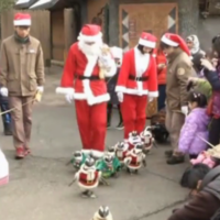 Ah nothing, just some penguins in tiny Santa suits