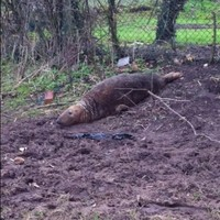 A seal has been found in the middle of a field in England