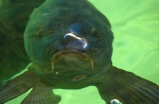 Here's why there are headlines about a guy having sex with a fish