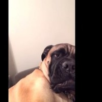 Dog can't hack owner singing Christmas carols, lets him know about it