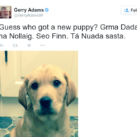 Gerry Adams and Francois Hollande both got puppies for Christmas