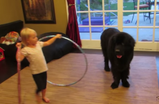 This little girl struggling to make her dog hula-hoop is utterly adorable