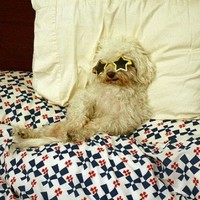 7 animals that perfectly sum up New Year's morning