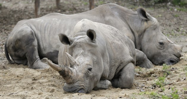 Limerick man sues Bloomberg for linking him to rhino horn gang