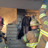 Woman rescued after getting naked and climbing down ex-boyfriend's chimney