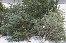 Are you taking down your tree and want to know where to recycle it?