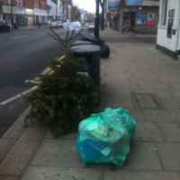 9 photos that sum up the tragedy of Christmas trees