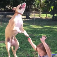 Overexcited dog knocks down kid in quest to pop bubbles