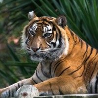 EuroMillion winners plan to adopt a tiger after scooping €500k