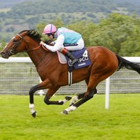 WATCH: Frankel sublime as he puts Canford Cliffs to the sword
