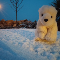 The 7 very different reactions to the arrival of snow in Ireland today