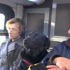 Dog takes the bus to meet her owner at the park, all by herself