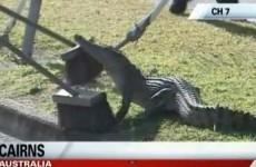 How to... capture a drain-dwelling crocodile