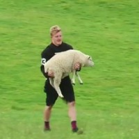 You know the way New Zealand has more sheep than people? The Chiefs use it to their advantage