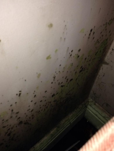 Mother forced to live in one room with kids as mould takes over rented apartment