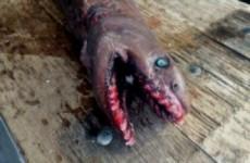 Fisherman captures horrifying 300-toothed 'living fossil' shark