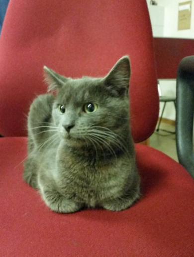 Guards in Finglas have found a cat ... and they're not delighted about it