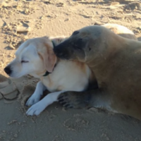 Seal and dog meet, immediately become best friends forever