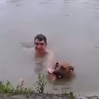 Dog thinks owner is drowning, jumps in to save the day